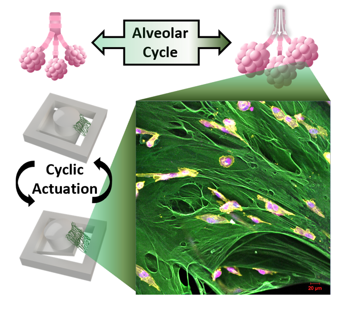 Our collaborative work with Solorio group to create 3D cancer cell culture platform using magnetic actuators has been published at Advanced Functional Materials!