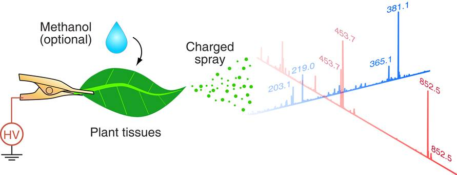 leaf spray direct chemical analysis of Determining forage quality: understanding feed analysis the most practical approach to feed analysis is one of chemical composition--direct determinations of moisture, ether extract (fat), ash (mineral), nitrogen leaf to stem ratio.