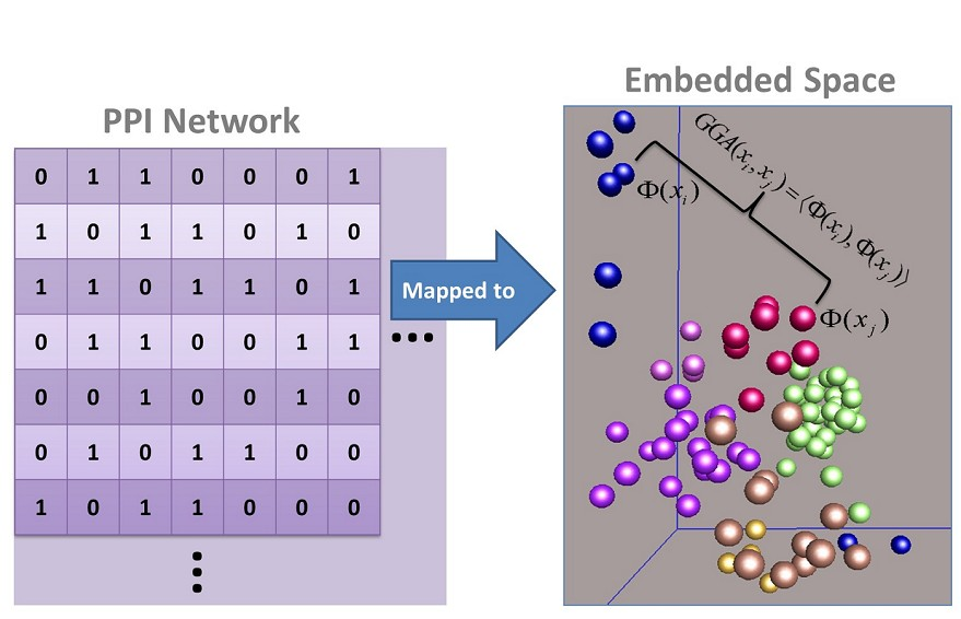 Global Geometric Affinity for Revealing High Fidelity Protein Interaction Network