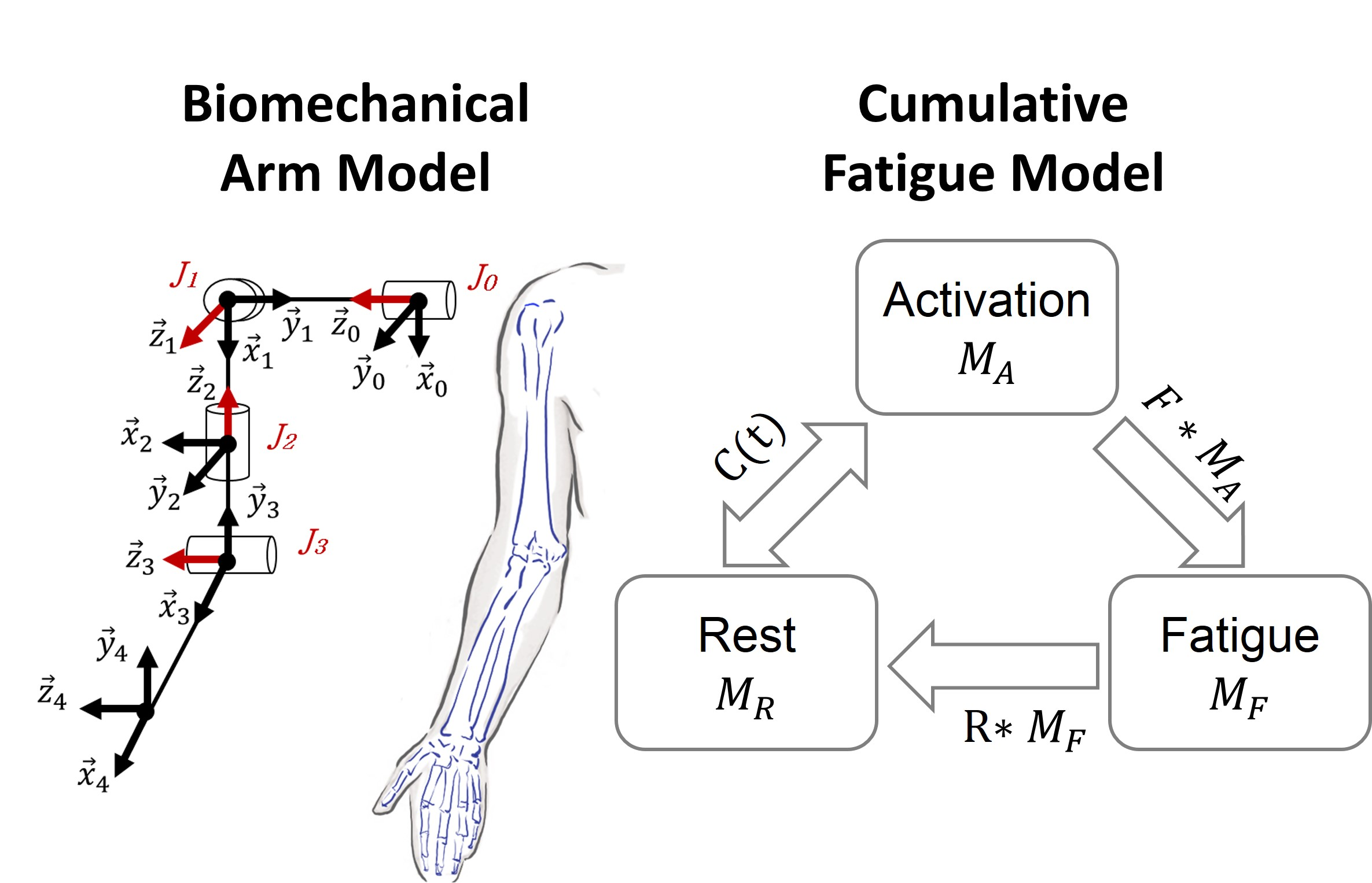 Modeling Cumulative Arm Fatigue in Mid-Air Interaction based on Perceived Exertion and Kinetics of Arm Motion