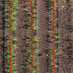 Sorghum Plant Centers 2016 dataset