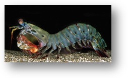 Research paper on shrimps